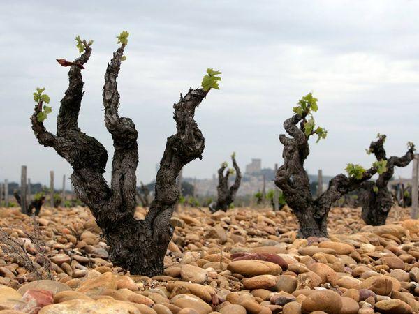 Vineyards-green_blog_network